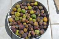One of the two batches of figs from my cousin Roula.